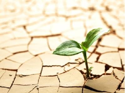 Đất sét có thể là khởi nguồn của sự sống