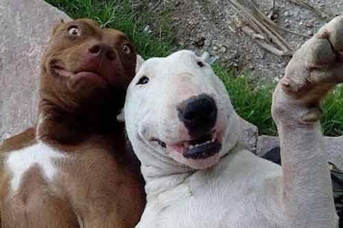 Ngắm những thước hình hài hước của các thú cưng trước camera - Ảnh 1