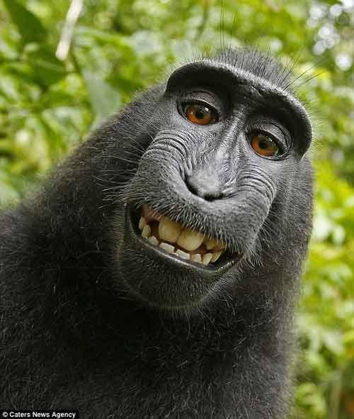 Ngắm những thước hình hài hước của các thú cưng trước camera - Ảnh 10
